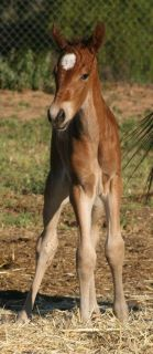 filly - 2 day old filly