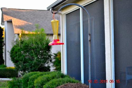 empty.. - for hummingbirds-sugar water