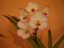 orchid - I want to learn more about orchids