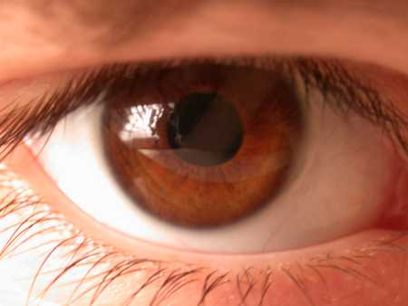 Brown eyes - Photo of a brown eye