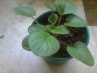 african plant - This is a new african plant