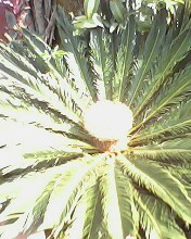 palm plant - This is a palm plant wiht new shoots