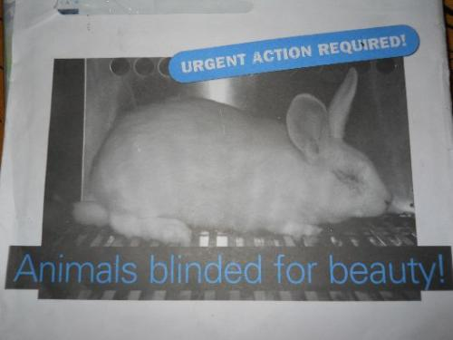 animals blinded for beauty - Look at this blind rabbit. It is blinded for your beauty.