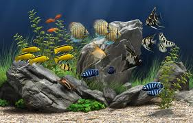 aquarium - a beautiful aquarium with fish