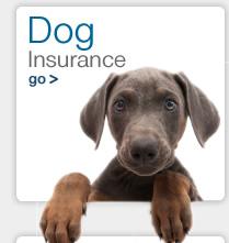 insurance - Dog / Pet insurance