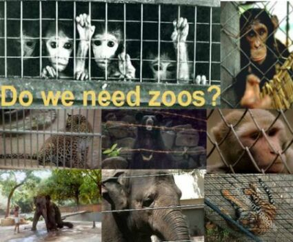 response to are zoos good or There's a simple empathy test we can apply  it is not always true that animals living for a long time is good for a zoo's bottom line  enrichment studies emerged primarily in response.