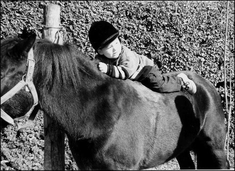 hanging on - A young boy on the back of a pony. I love seeing pictures of young children being introduced to animals of all kinds!