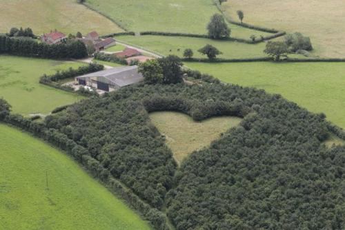 Farmer Plants Heart-Shaped Meadow for Late Wife - This was done by Howes, a farmer and a gardener he hired for his late wife, Janet using 6000 oak trees to etch out a giant heart in the middle of his field in South Gloucestershire, England.