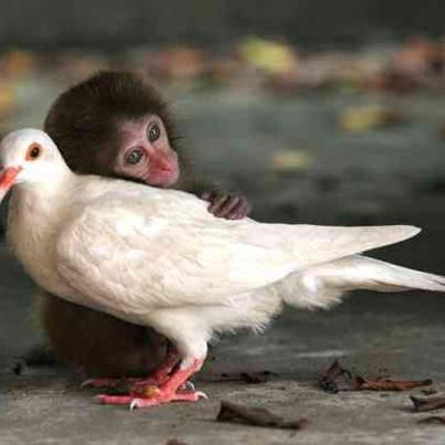 good relations - even animals are understand good relationship means