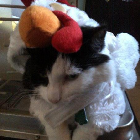 Patches in her costume - Patches the Chicken.