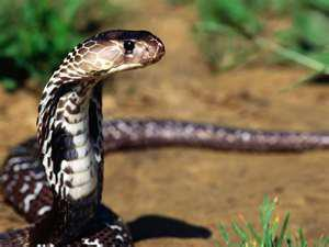 a snake below tree - snakes have become almost extinct due to mass destruction of jungles