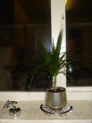 Indoor Plant No.2 Bought For The Kitchen - Another unidentified plant bought for the kitchen
