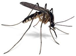 Dealy mosquito - mmm..I hate mosquitoes