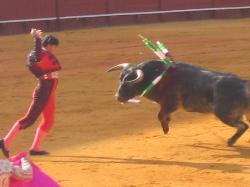 BullFight - this is the worst tradicional thing of my country. Bullfight its terrible