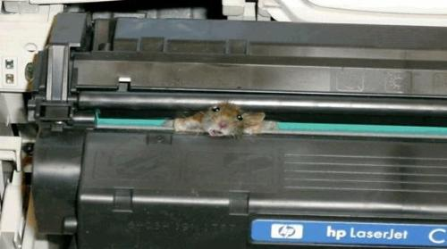 mouse in a printer - a dead mouse in printer
