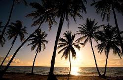 Caribbean - Caribbean