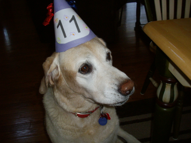 Abby's 11th birthday - she made it to 13