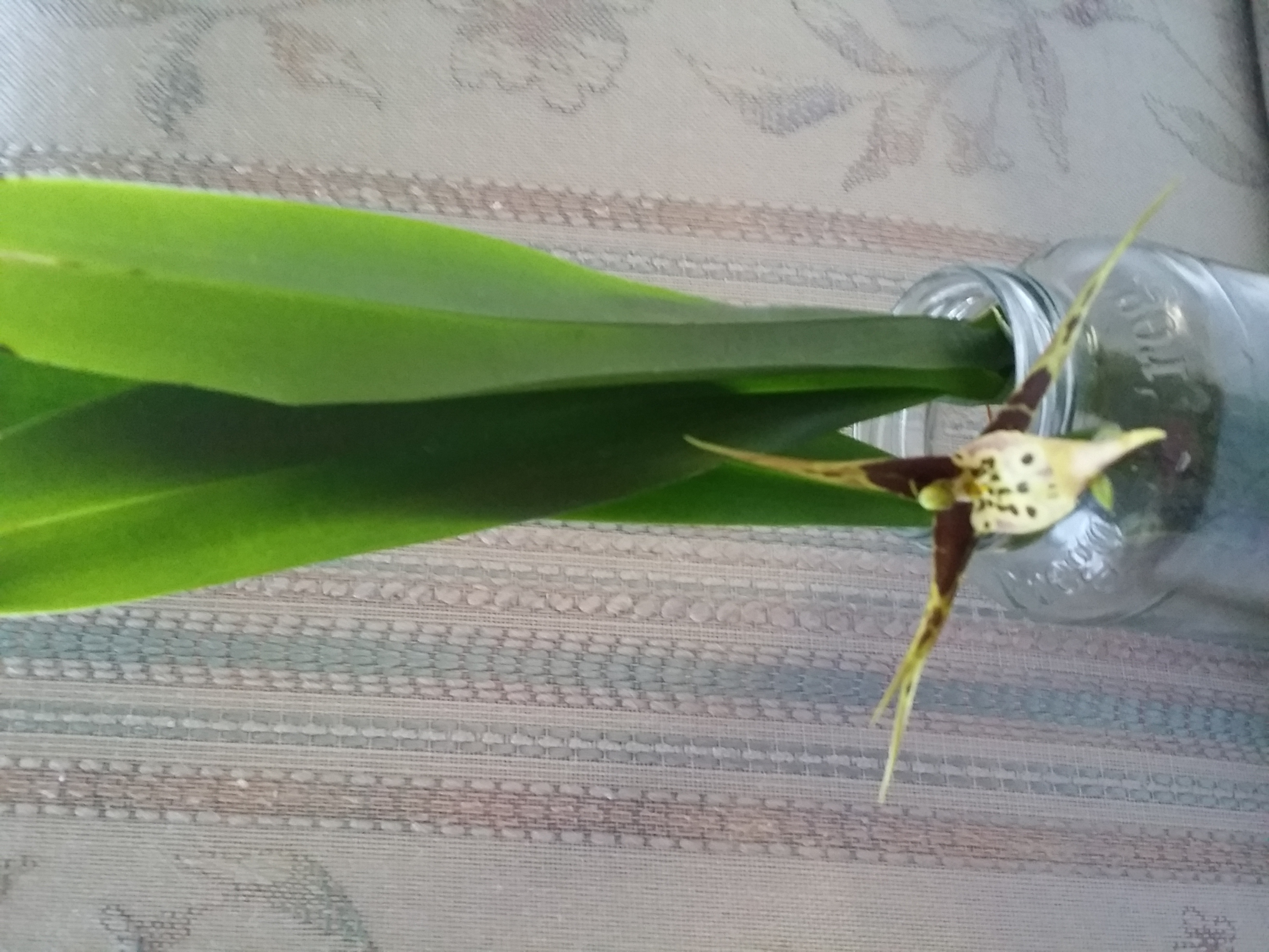This is an orchid that flowered in a jar of water, how cool!