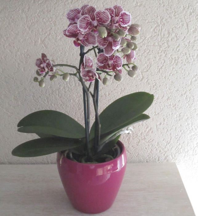 Potted orchids - original photo by Anna @LadyDuck