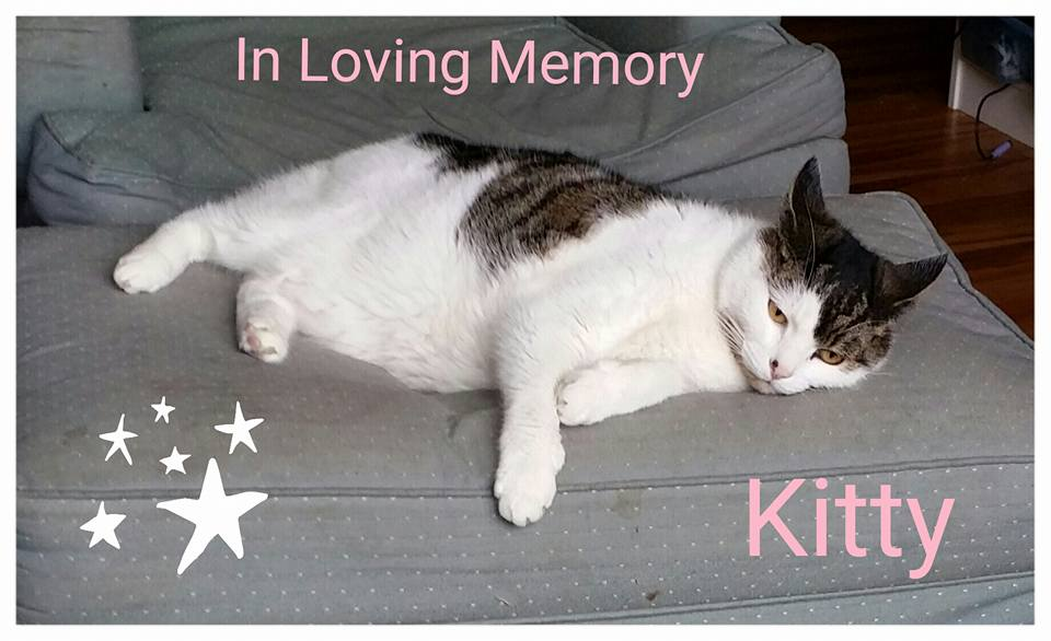 This is a pic of Kitty, taken 2 weeks before she passed on. RIP Kitty we love you!
