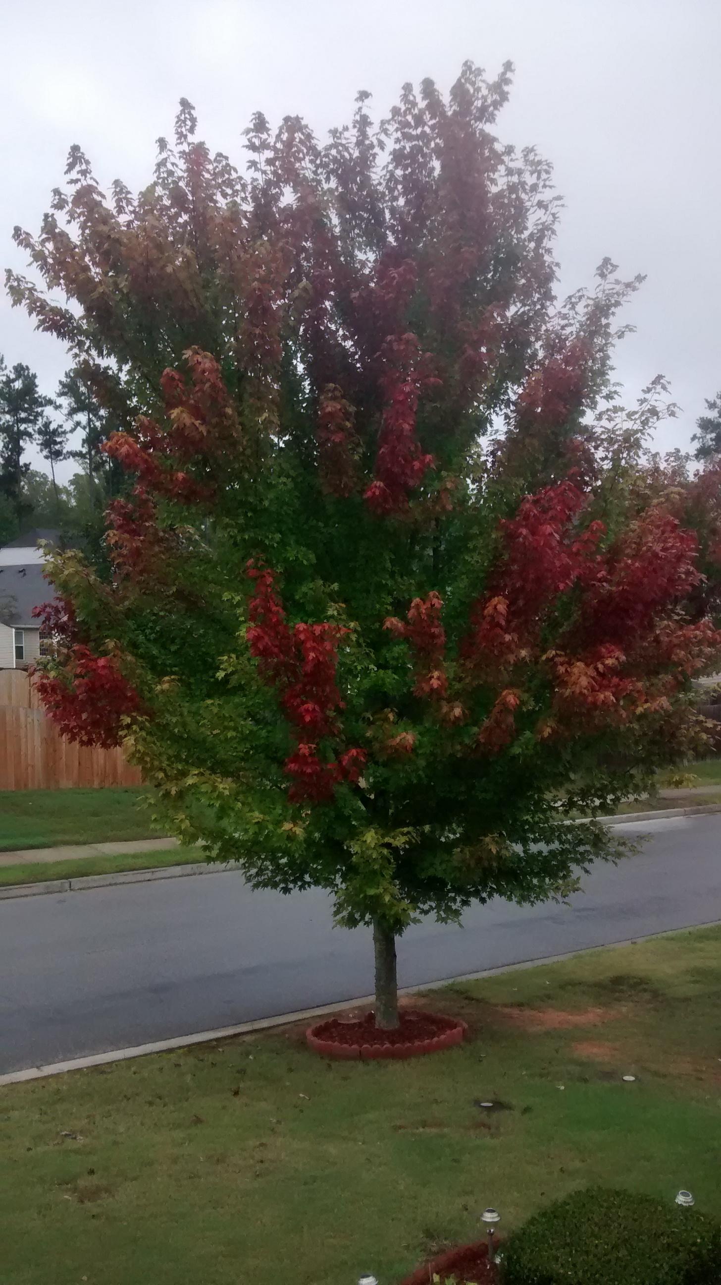 Fall in Georgia