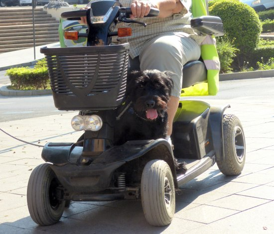 My own photo of our dog on the mobility scooter....