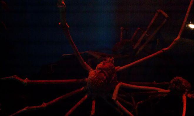 Creepy Japanese Crab