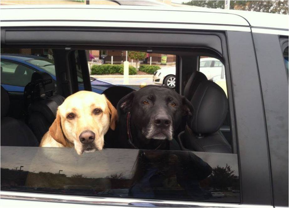 Picture is our babies taking a ride with us.
