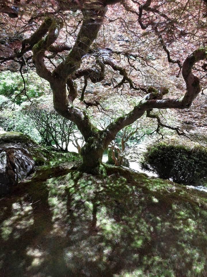 Portland Oreg, Japanese Gardens, taken by me