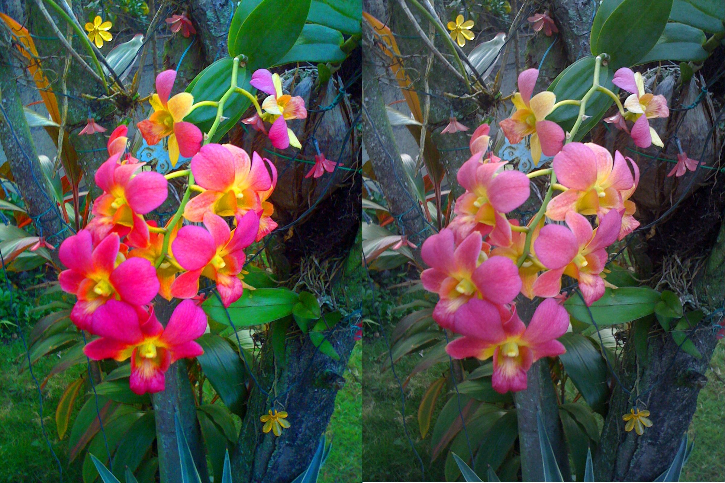our orchids duplicated