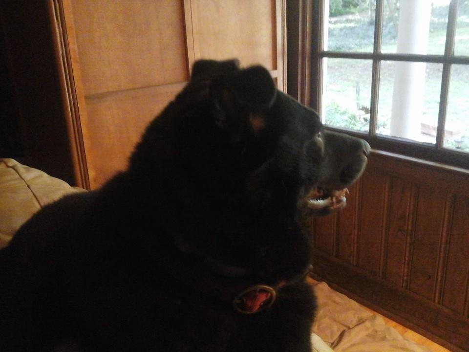 Dog on patrol-