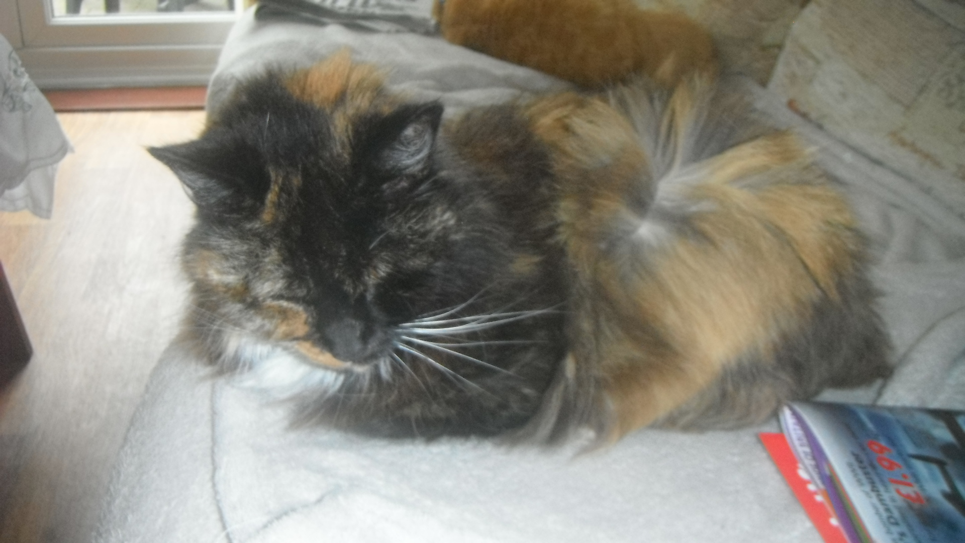 Photo taken by me – My Cat Smudge