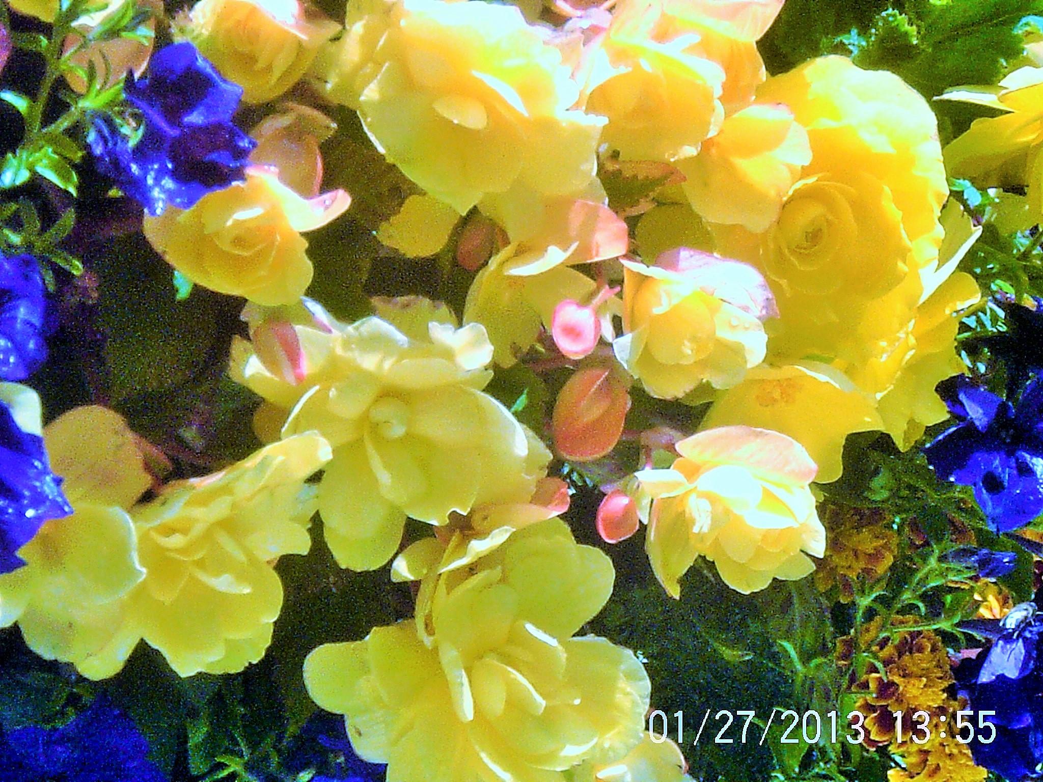 Flowers in my garden last summer