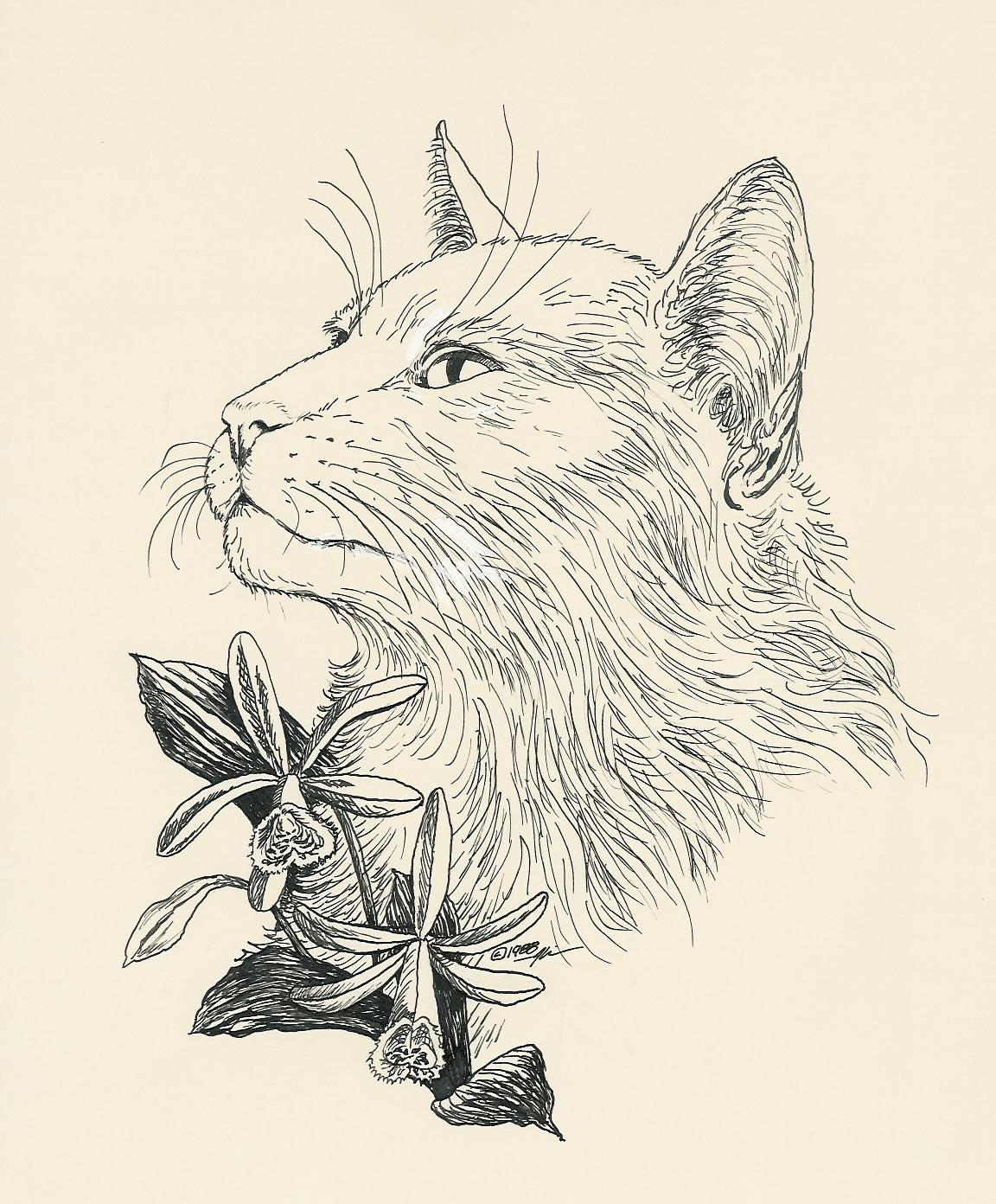 My original pen and ink drawing of an angora with an orchid