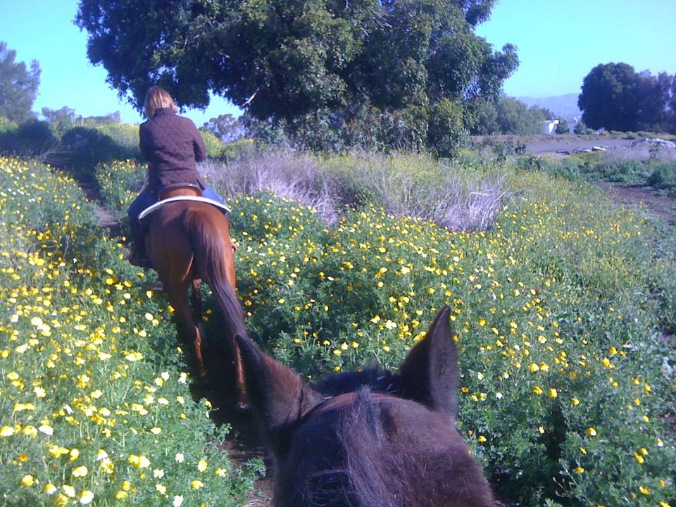 Laguna Woods Trailride; Photo taken by author; all rights reserved.