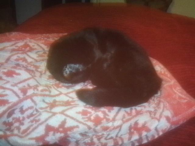 Princess having a cat nap