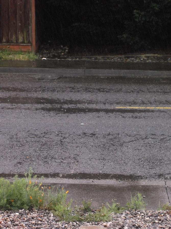 rain on a walk 4-22-16