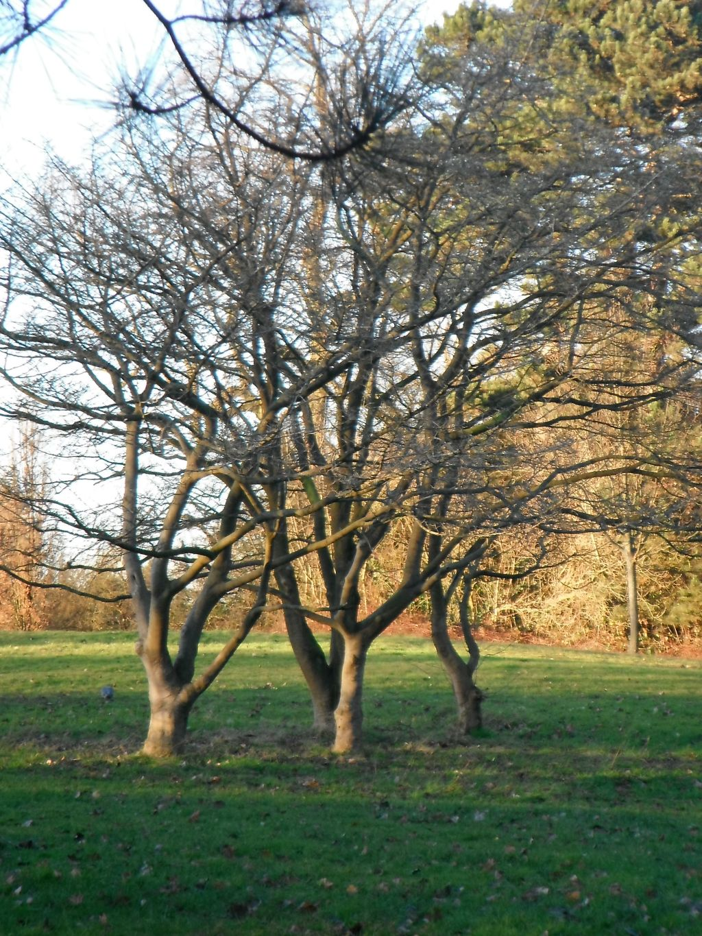 photo taken by me - trees in Bruntwood Park, Manchester