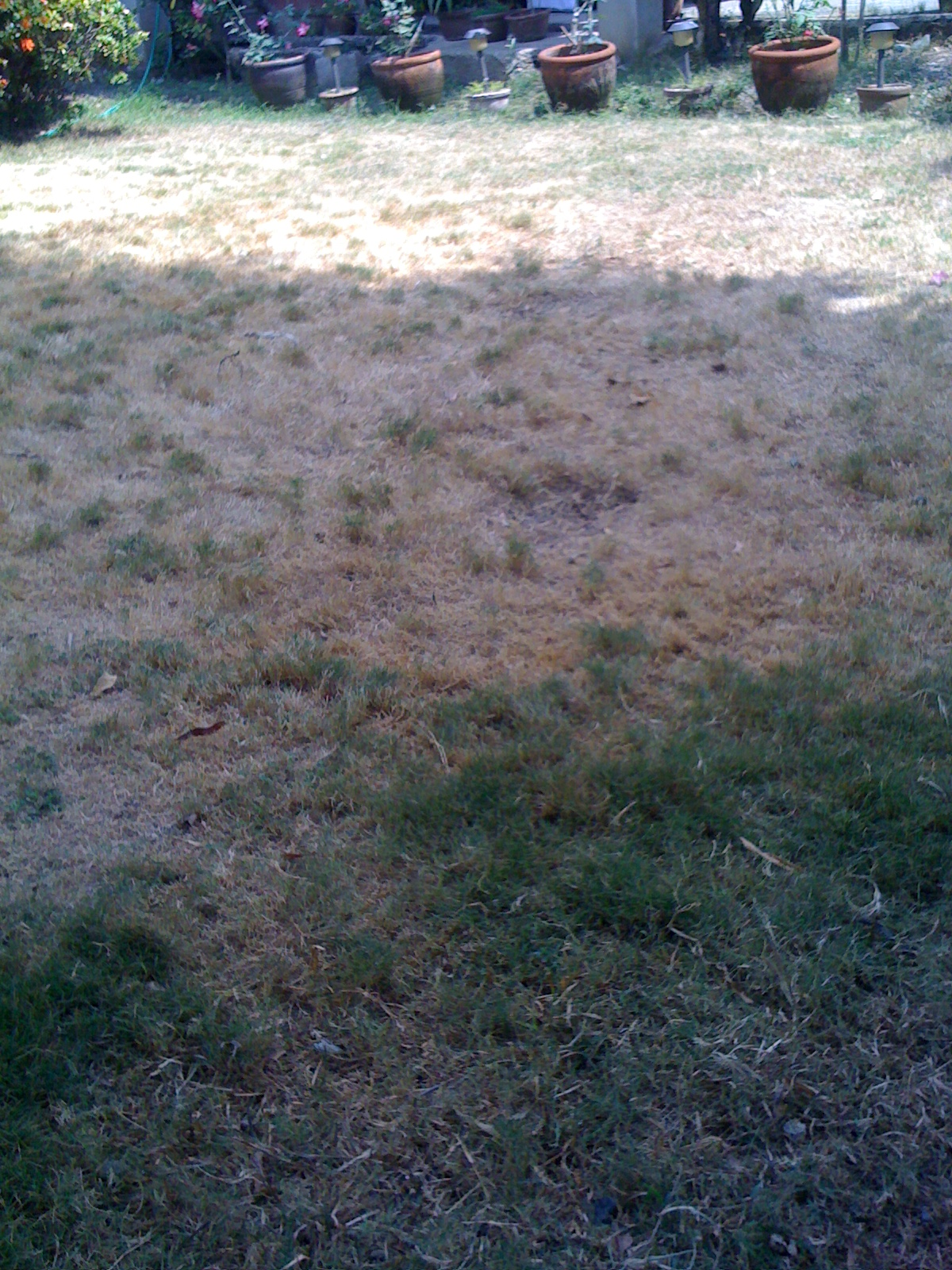 this is how our local govenment looked like during that Chinese mayor's administration--- dry!