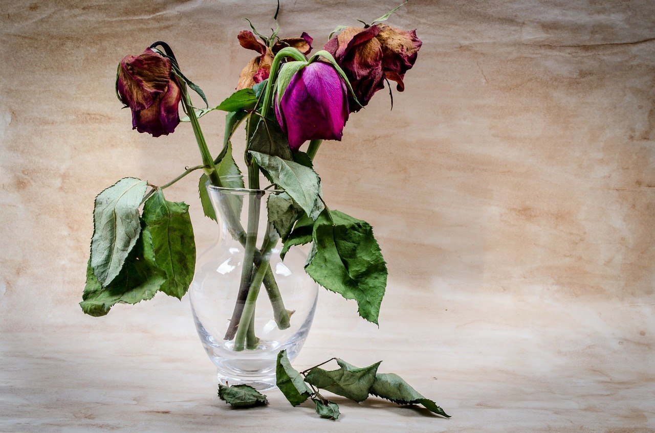 https://pixabay.com/en/flower-dead-wither-rose-death-316437/