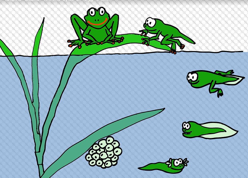 freeimage of frog lifecycle
