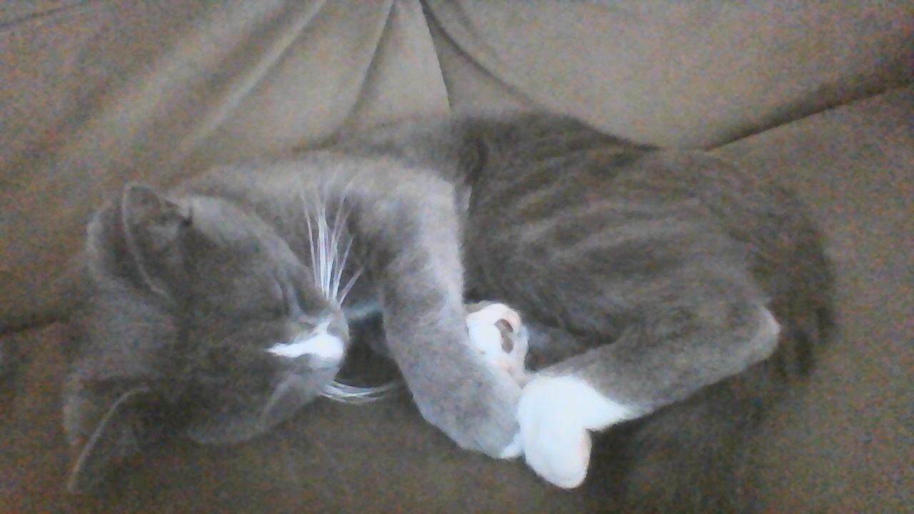Tuna Sleeping