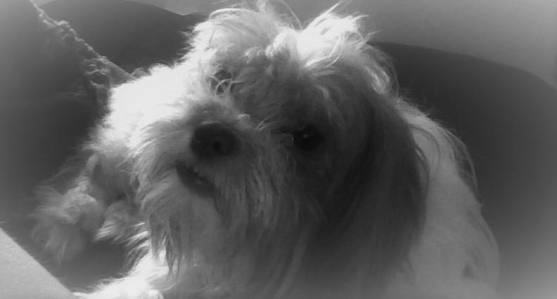 My dog Mazey