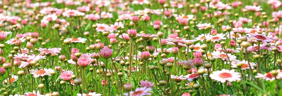 https://pixabay.com/en/flower-meadow-wildflowers-meadow-1510602/