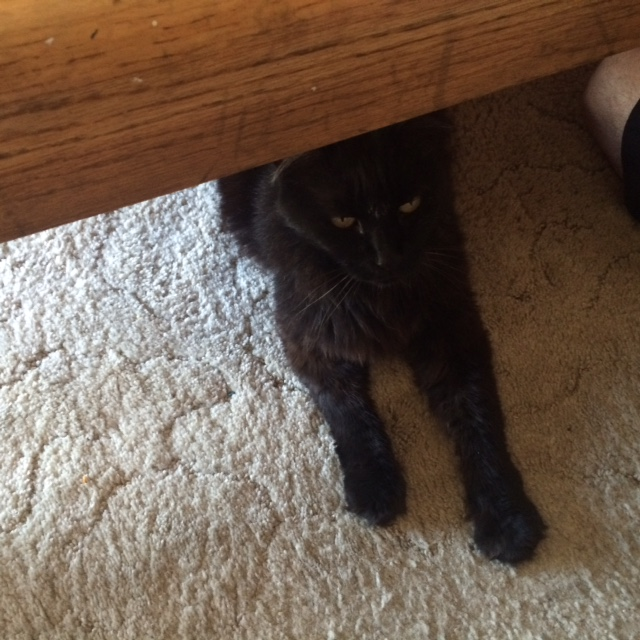 Gremlin under the coffee table