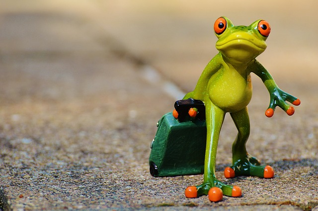 https://pixabay.com/en/frog-farewell-travel-luggage-897418/