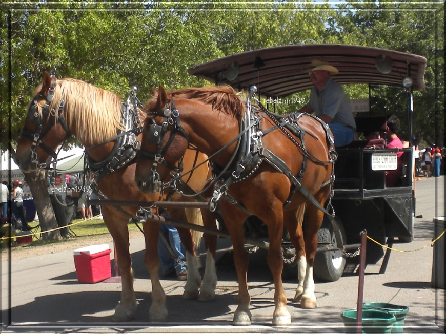 The Las Cruses NM wine fest in 2011, boy did I want to pet those horses, he wouldn't let me though.
