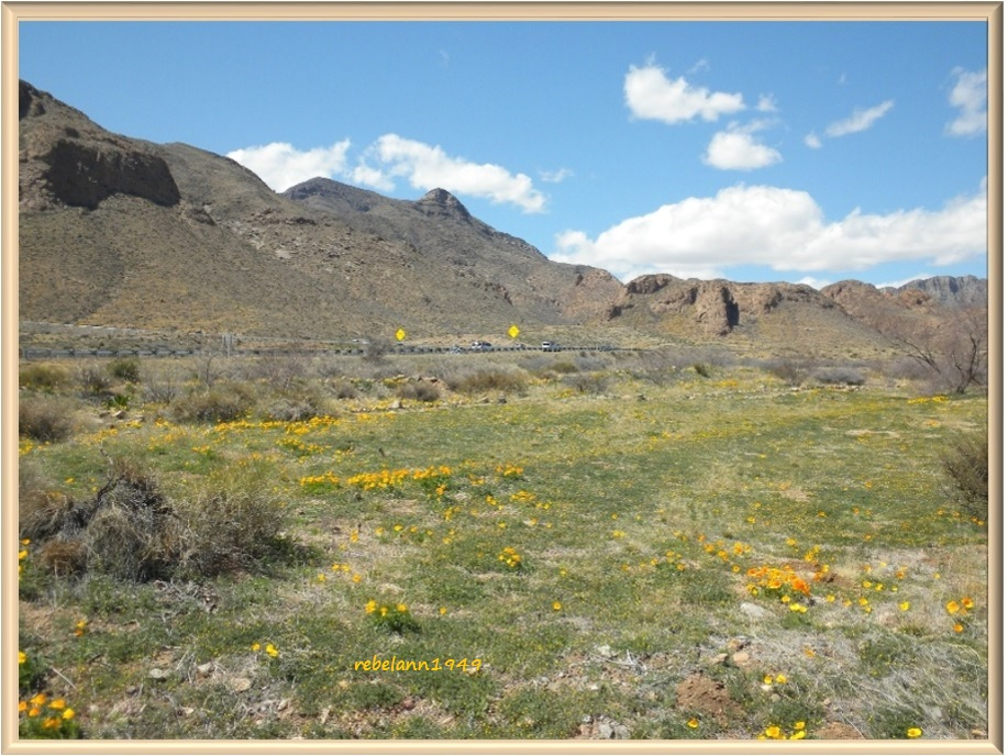 A shot taken in March 2012, not a lot of poppies but enough to make it colorful