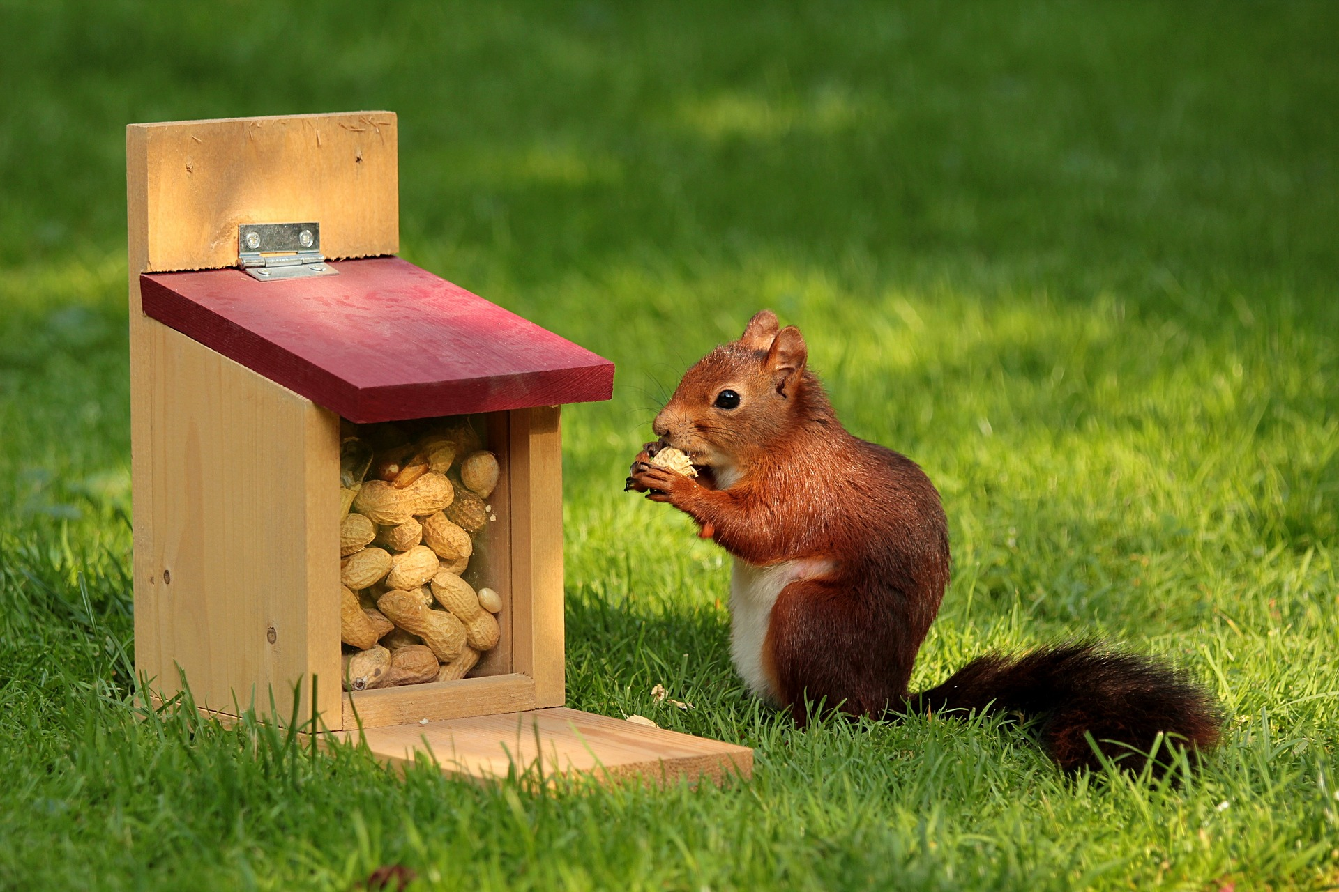 https://pixabay.com/en/animal-squirrel-sciurus-bird-meal-927904/