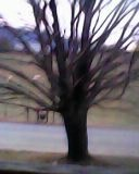 David's Tree in the winter. Taken with a very tiny digital camera by Sunny Shores